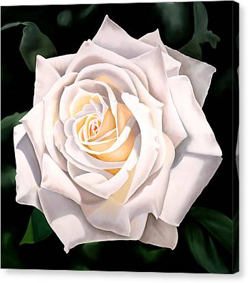 White Rose Canvas Print by Ora Sorensen