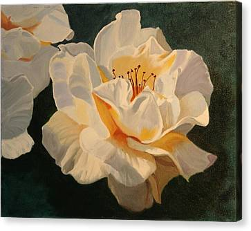 White Rose Canvas Print by Robert Tower