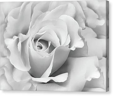 Canvas Print featuring the photograph White Rose Ruffles Monochrome by Jennie Marie Schell