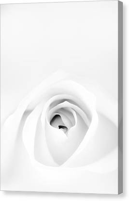 Black And White Florals Canvas Print - White Rose by Scott Norris