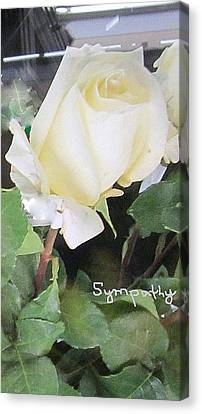 White Rose - Sympathy Card Canvas Print