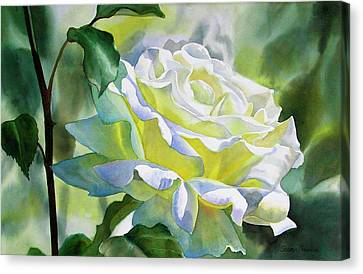 White Rose With Yellow Glow Canvas Print