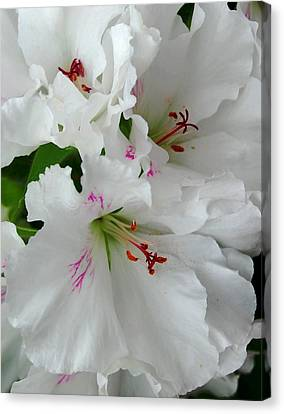 Canvas Print featuring the photograph White Ruffles by Marilynne Bull