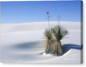 White Sands Dune And Yuccas Canvas Print by Sandra Bronstein
