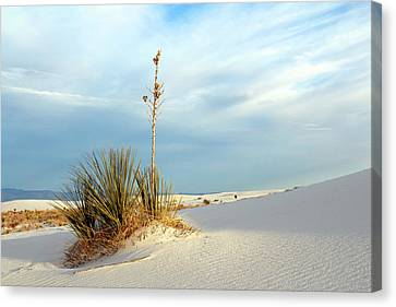 White Sands Evening Canvas Print