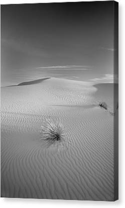 White Sands Canvas Print by Peter Tellone