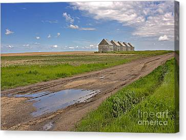 White Sheds On A Prairie Farm In Spring Canvas Print by Louise Heusinkveld