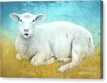 White Sheep Canvas Print by KaFra Art