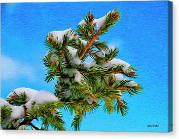 White Snow On Evergreen Canvas Print by Jeff Kolker