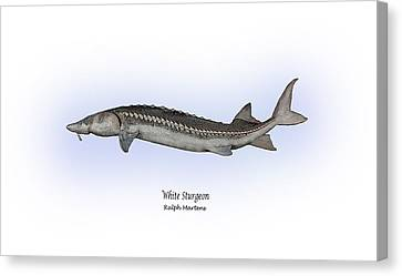 White Sturgeon Canvas Print by Ralph Martens