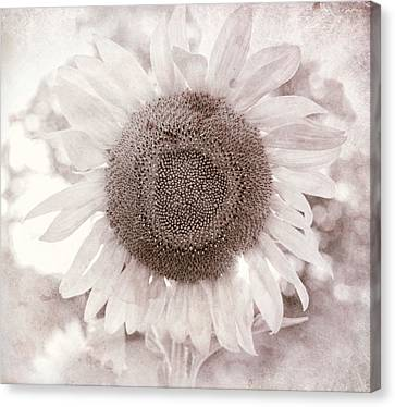White Sunflower Square Canvas Print by Terry DeLuco