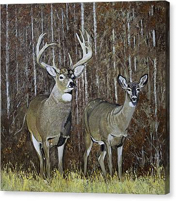 White Tail Couple 24x 24x3/4 Inch Oil On Canvas Canvas Print