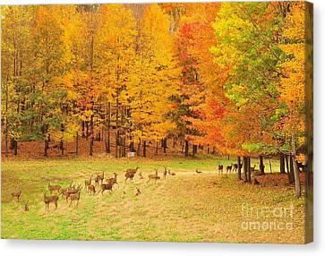 White Tail Deer Herd Canvas Print by Terri Gostola