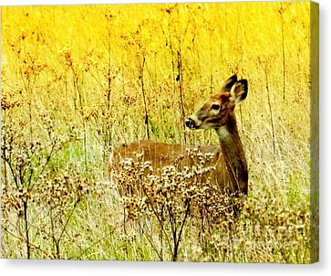 White Tail Doe On Alert Canvas Print by Julie Dant