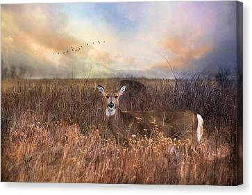 Canvas Print featuring the photograph White Tail by Robin-Lee Vieira