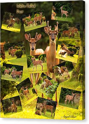 Canvas Print featuring the photograph White-tailed Collage by Angel Cher
