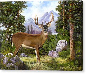 White Tailed Deer Canvas Print by Robert May
