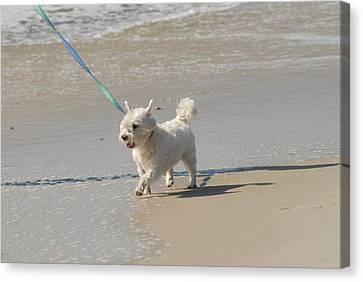 Litter Mates Canvas Print - White Terrier by Joyce StJames