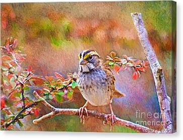 White Throated Sparrow - Digital Paint Canvas Print by Debbie Portwood