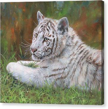 Canvas Print featuring the painting White Tiger Cub 2 by David Stribbling