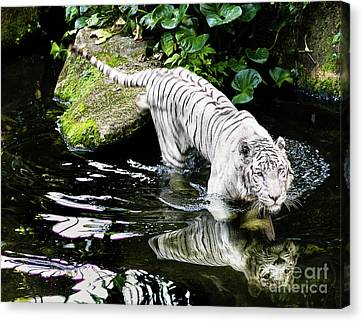 White Tiger Canvas Print by M G Whittingham