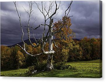 White Tree Canvas Print by Garry Gay
