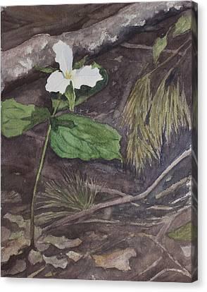 White Trillium  Canvas Print by Debbie Homewood