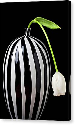 White Tulip In Striped Vase Canvas Print