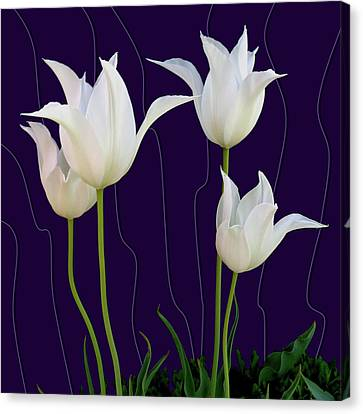 White Tulips For A New Age Canvas Print
