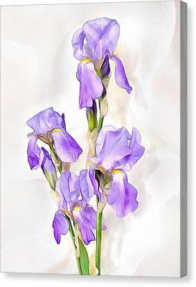 White-violet  Iris Canvas Print