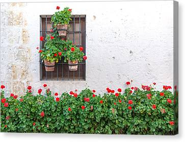 White Wall And Red Flowers Canvas Print