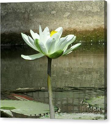 Canvas Print featuring the photograph White Water Lily 2 by Randall Weidner