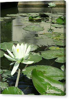 Canvas Print featuring the photograph White Water Lily 3 by Randall Weidner