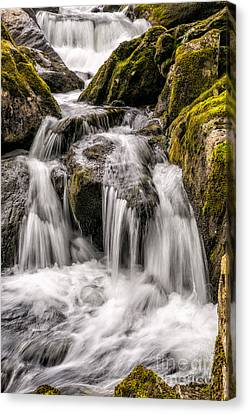 White Water Rapids Canvas Print by Adrian Evans