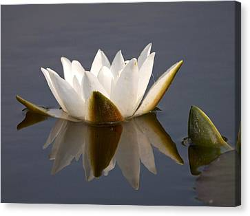 Canvas Print featuring the photograph White Waterlily 2 by Jouko Lehto