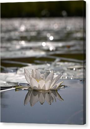 Canvas Print featuring the photograph White Waterlily 3 by Jouko Lehto