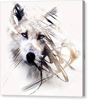 Framed Canvas Print - White Wolf by Jackie Flaten