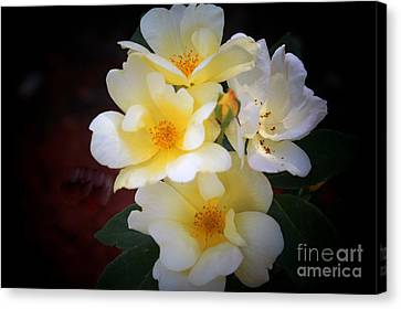 Althea Canvas Print - White Yellow Hues by Deb Hayes