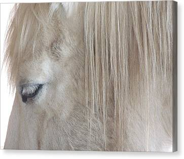 Whiteeyes Canvas Print