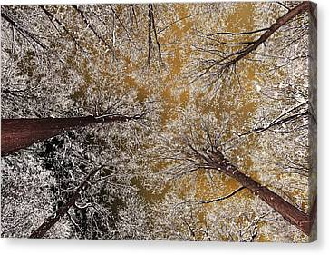 Canvas Print featuring the photograph Whiteout by Tony Beck