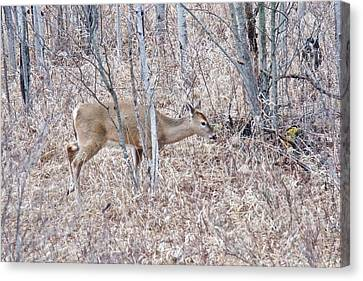Canvas Print featuring the photograph Whitetail Deer 1171 by Michael Peychich