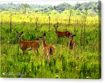 Whitetail Deer Family Canvas Print by Barbara Bowen