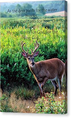 Canvas Print featuring the photograph Whitetail Deer Panting by Thomas R Fletcher
