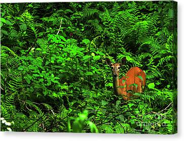 Whitetail Doe In Ferns Canvas Print