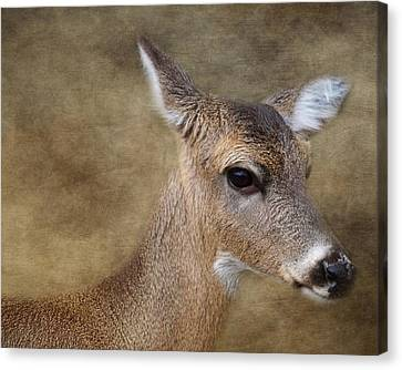 Whitetail Doe Portrait Canvas Print by TnBackroadsPhotos