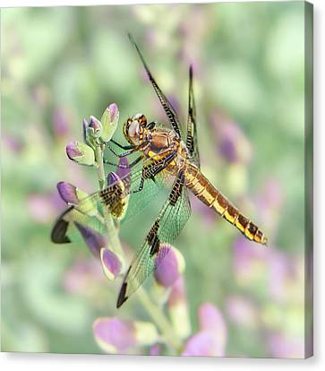Canvas Print featuring the photograph Whitetail Dragonfly On False Indigo 2 by Jim Hughes