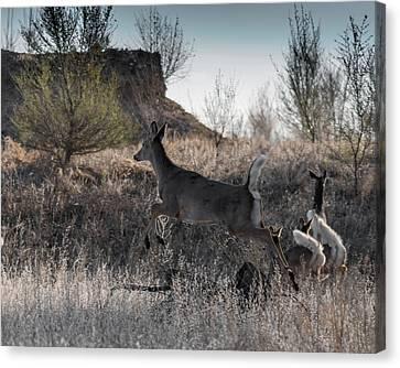 Fountain Creek Nature Center Canvas Print - Whitetail In Flight by Ernie Echols