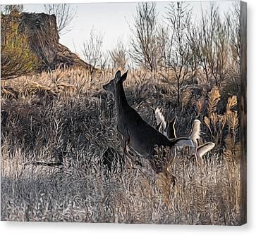 Fountain Creek Nature Center Canvas Print - Whitetail Lift Off Digital Art by Ernie Echols