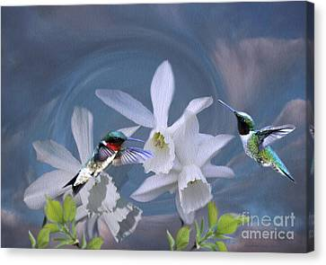 Whirlwind Hummers Canvas Print