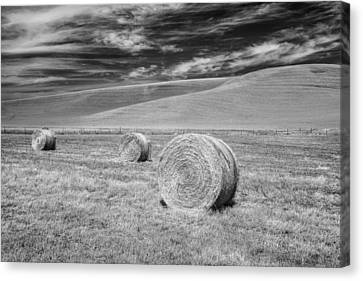 Fields Canvas Print - Whitmann County Work by Jon Glaser